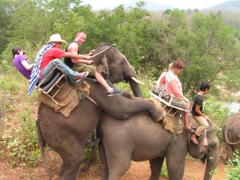 elefant1.jpg