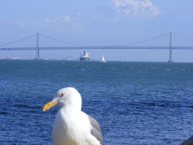 15Bay Bridge.jpg