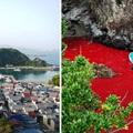 A japán Taidzsi a brutalitás szimbóluma