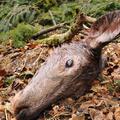 A hobbi, aminek szétdobált béldarab a címere: a vadászat