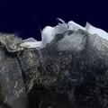 A Tátra alvó lovagjának legendája – Giewont
