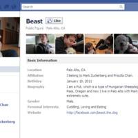 Zuckerberg pulija és a kisállatközösségek