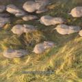 Google Earth: szupertitkos tengeralattjáró és a vonuló elefántok