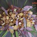 Menyasszonyi csokor orchideából