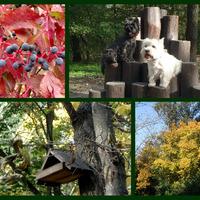 Színpompás ősz