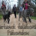 Írfarkasok találkozása Pákozdon :-)