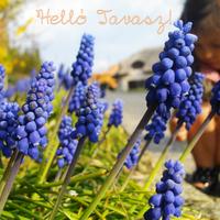 Helló Tavasz!!