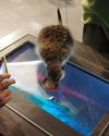 Harmincmilliós siker az új állatkerti örökbefogadási program