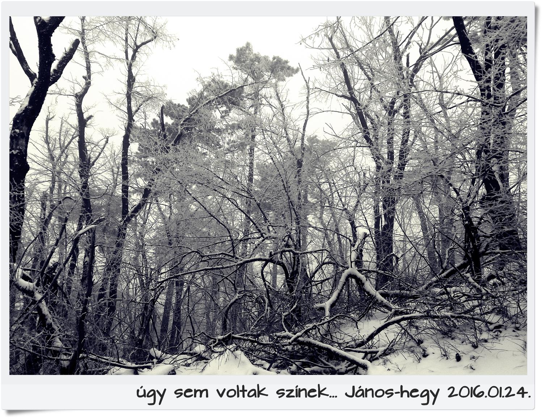 janoshegyff2.jpg