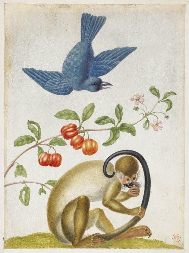 bm-dorothea-01-majom.jpg