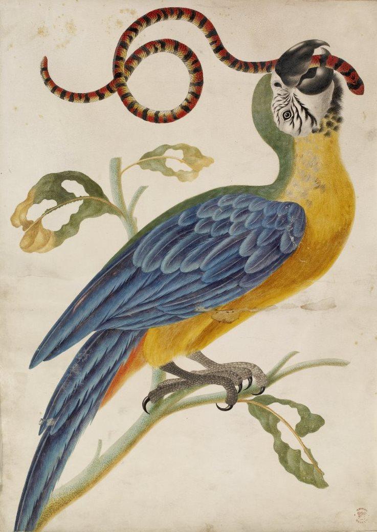 bm-dorothea-04-parrot.jpg