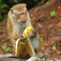 Ha banánnal fizetsz, majmot kapsz