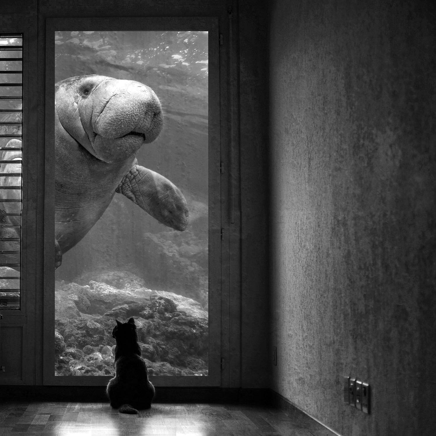 cat-and-manatee_1.jpg