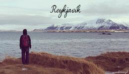 Mit láttunk Reykjavíkban?