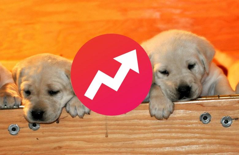 buzzfeed-puppies-e1424889964411.jpg
