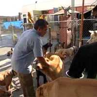 Cesar Millan videós képzés a kutyákhoz