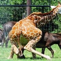 Homoszexuális állatok