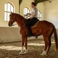 Ló a lovas ülésén