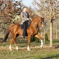 Tavaszi ötnapos ló- és lovasképzés