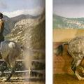 A keret elfogadása és a ló formája