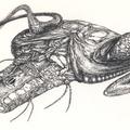 Grafika reloaded: idegen hajó tollrajzok (1. rész)