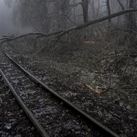 Kidőlt fa, műszaki hiba - késnek a vonatok