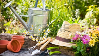 Kertészt keres a város