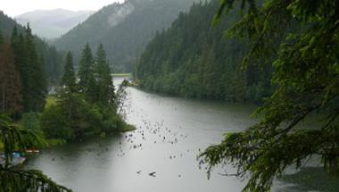 Csemetés túrák: a Bakonyi Gyilkos-tó