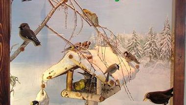 Karácsonyi üdvözlet  az MTM Bakonyi Természettudományi Múzeumtól
