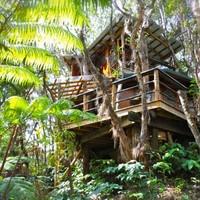 A sztárok is szeretik a fára épült házakat
