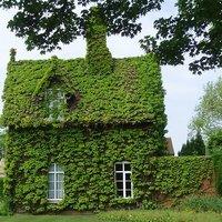 Amikor a zöldtől nem látni a házat