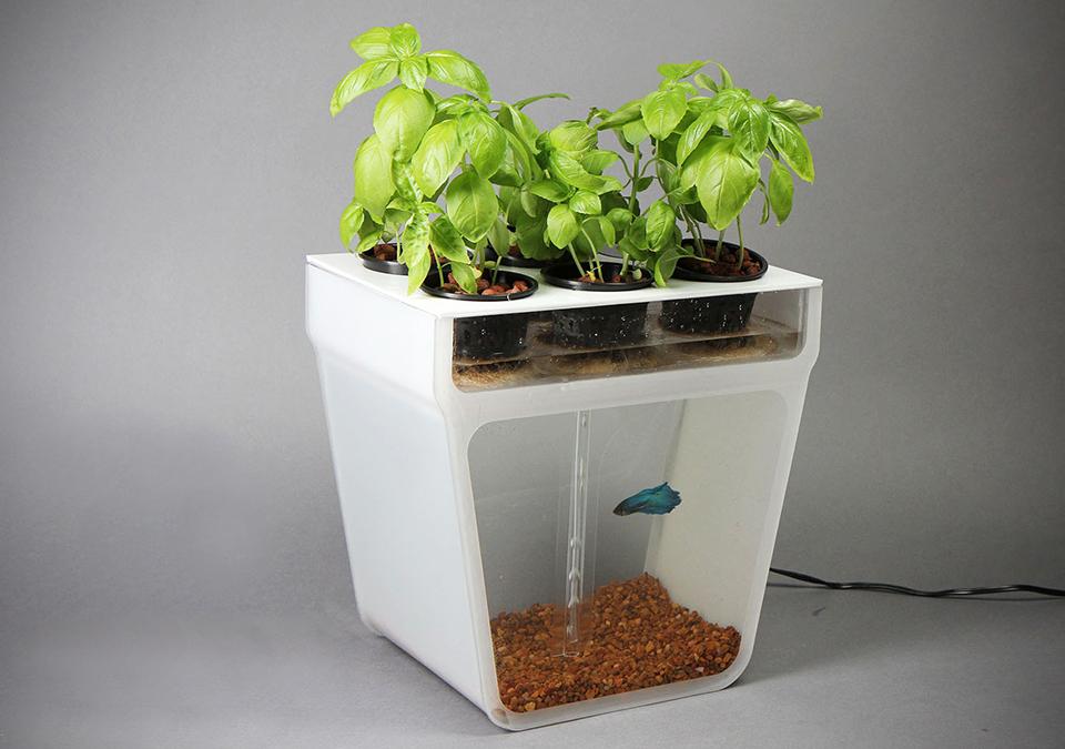 aquaponics-home-kit-2.jpg