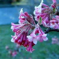 A tavasz színei - márciusban