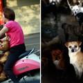 Elkezdődött a yulin-i pokol
