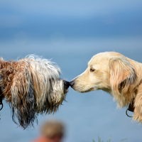 Mi is kipróbáltuk a fonyódi kutyastrandot