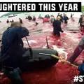 Ezrek vonultak utcára a Dániában megölt delfinekért