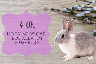 4 ok, hogy ne vegyél élő állatot húsvétra