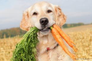 Vegetáriánus kutyatápok