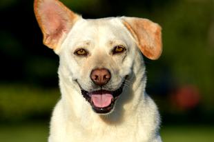 Gyepmesteri telepről fogadtuk örökbe a kutyánkat