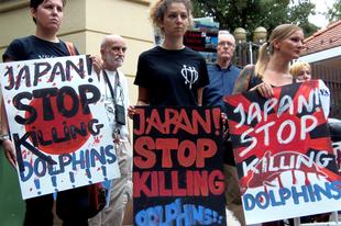 Már megint kezdődik a taidzsi-i horror