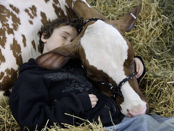 cow-love-2.jpg