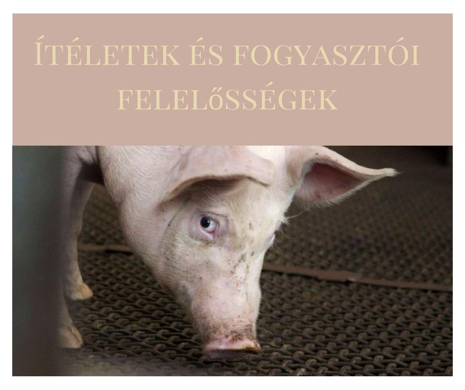 iteletek_es_fogyasztoi_felelossegek.png