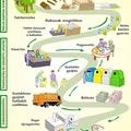 Tetra Pak újratöltve, azaz az újrahasznosítás