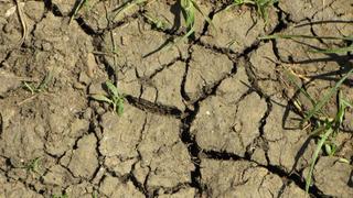 Tömeges éhhalált okozhat a klímaváltozás