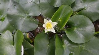 A növények ötödét kipusztulás fenyegeti