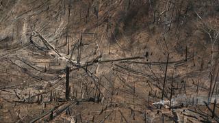 A szeme előtt zajlik az esőerdők irtása