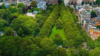 Mennyire tisztítják a fák egy város levegőjét?