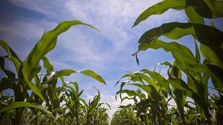 A mezőgazdaságban rejlő potenciál