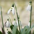 Tavaszköszöntő alkotás