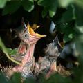 Állatok világnapja és madármegfigyelési világnap
